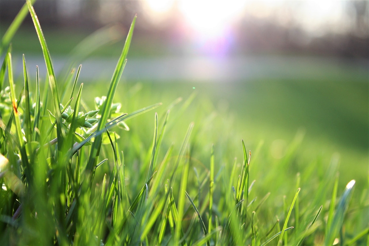 2020: Looking Forward to Spring Lawn Care