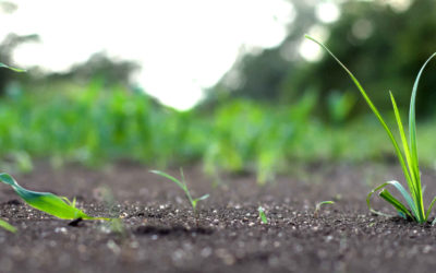 The Benefits of Humic Acid