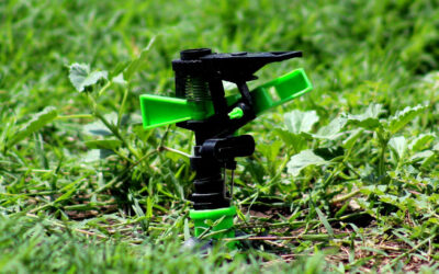 Best Tips for Watering Your Lawn